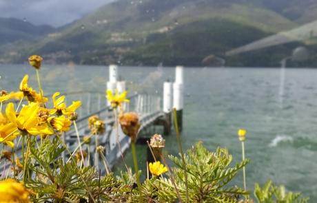 Dervio fiori Viandante1